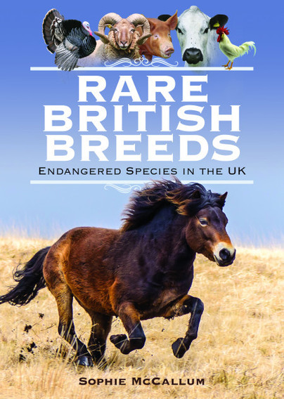 Rare British Breeds